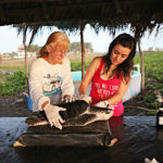 "Photo illustrant la mission ""Protection des tortues et de la mangrove au Guatemala"", avec Lifetime Projects"