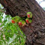 Quatre oiseaux exotiques sortant la tête d'un tronc d'arbre.