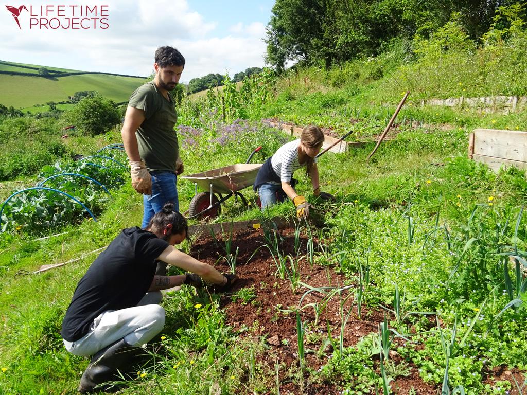 Photo de l'équipe strasbourgeoise de Lifetime Projects en séjour dans une ferme bio en Angleterre
