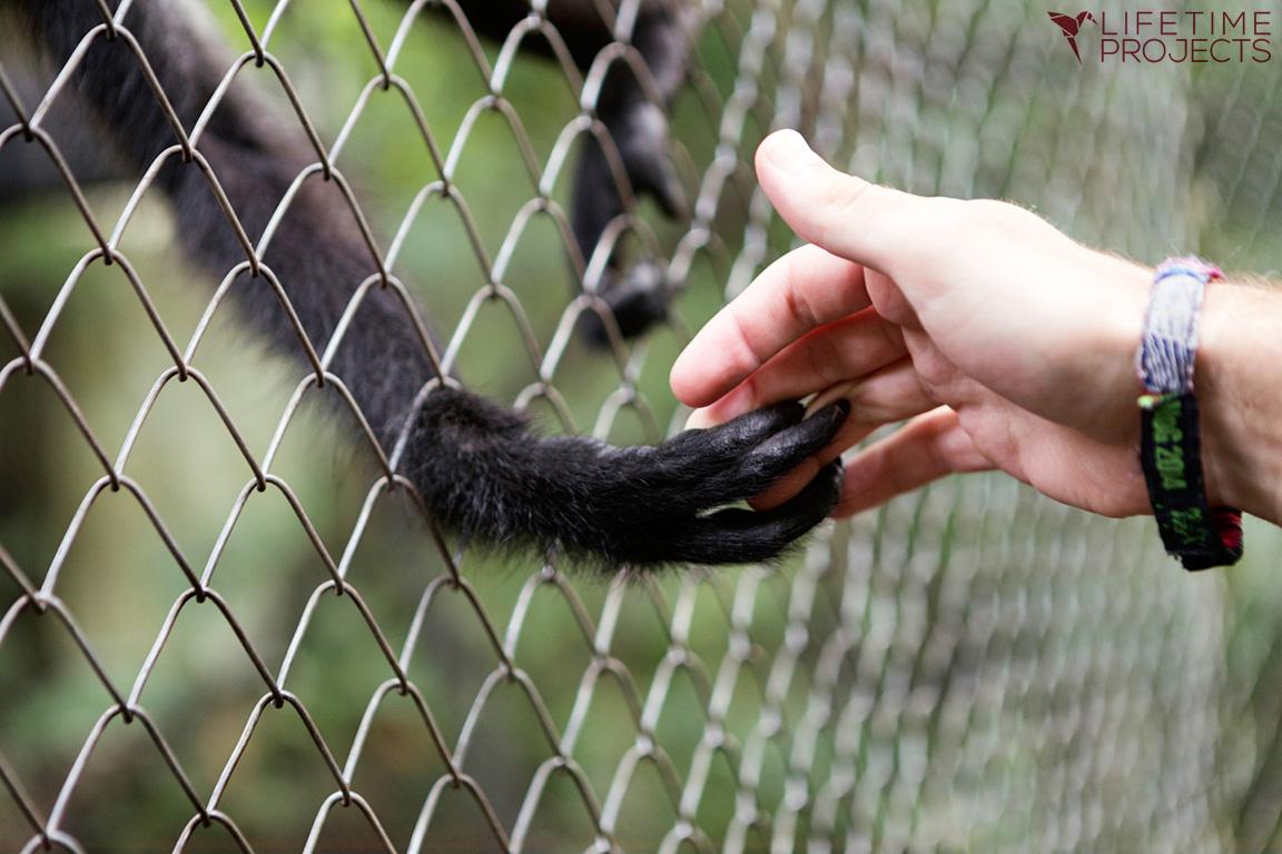 """Photo illustrant la mission """"Refuge pour animaux sauvages au Guatemala"""", avec Lifetime Projects"""