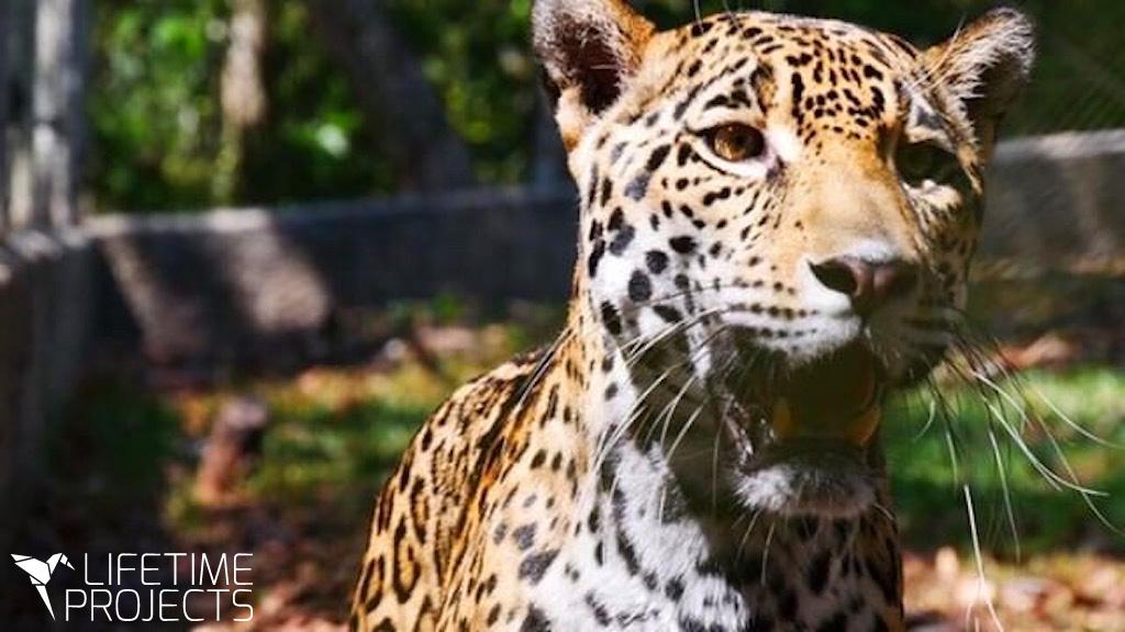 Photo du témoignage de Louis Marquenet, en mission dans un refuge pour animaux au Guatemala avec LifeTime Projects