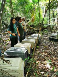 Photo de la mission Réintroduction de singes-araignées au Guatemala, avec Lifetime Projects