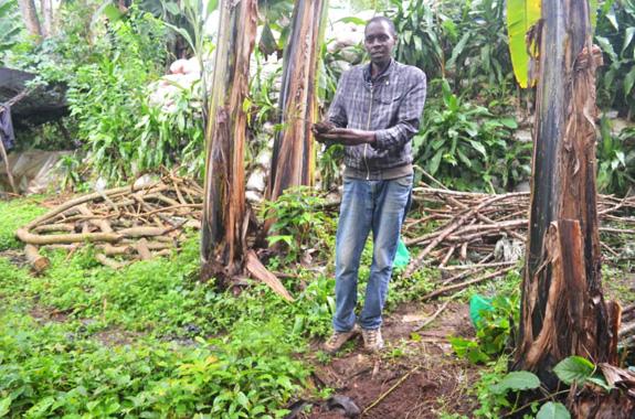 Photo de la mission Agriculture biologique en Tanzanie, avec Lifetime Projects