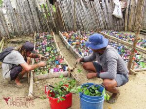Photo de la reforestation de la mangrove en Colombie, avec LifeTime Projects